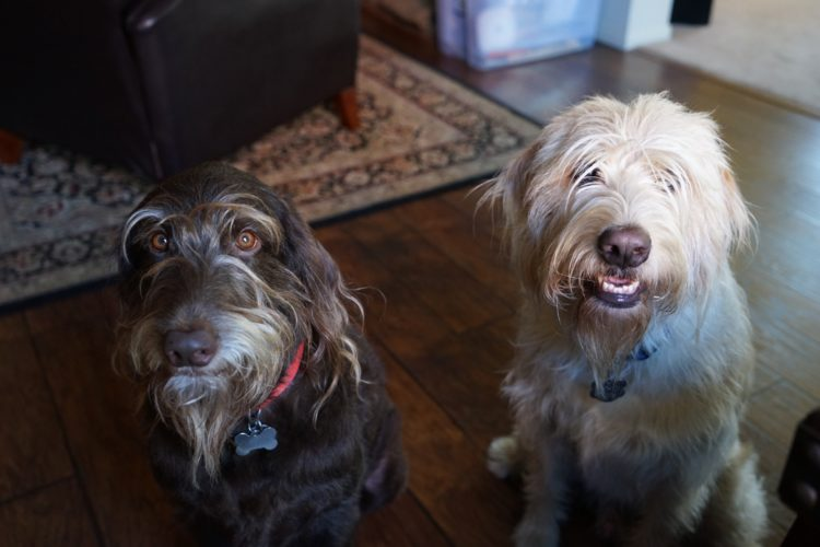 Oliver and Kodi