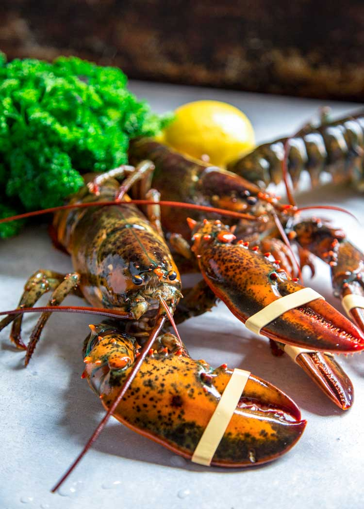 live lobster with banded claws, ready for steaming