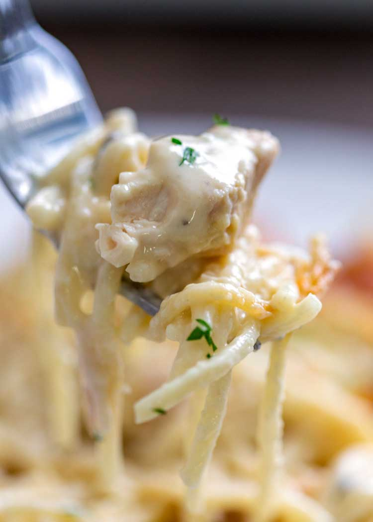 close up shot forkful of Chicken Tetrazzini Casserole